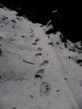 Bypass Trail