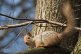 squirrel in Tsaritsino park