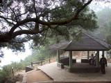 Hiking Log: Shatin Pass - Tai Po Road - Tai Wai (¨F¥ÐËü, ¤j®H¹D, ¤j³ò)