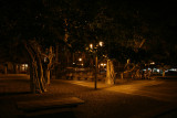 Lahaina Banyon Tree at night