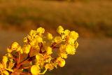Golden hour / Hora dorada