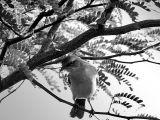 Bird / Ave