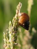Snail / Caracol