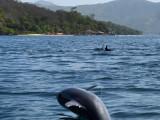 Dolphins / Delfines