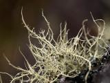 Moss / Musgo