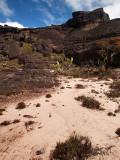 Mini desert