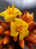 Tepuy Flora