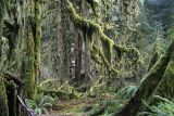 Rain Forest - Olympic NP