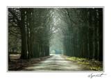 Route dans les bois.jpg