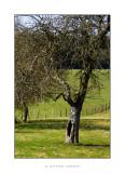 arbre creux.jpg