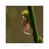 araignée tige.jpg