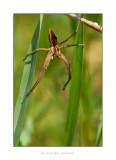 araignée verticale.jpg