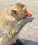 Bang Saen, Wild monkeys @ Monkey Mountain