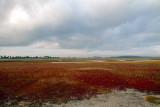 Bloom on the Salt Marsh.jpg