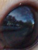 Squirrel's eye.jpg