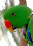 Green Parrot.jpg