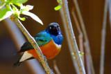 Colorful Bird.jpg