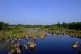 Dead Lakes.jpg