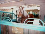 A Jutland Horse