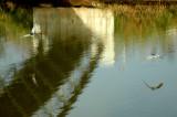 REFLECTIONS IN YARKON RIVER