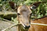 Deer with stick. Medium.jpg