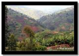 Land of a Thousand Hills, on the way to Kibuye, Rwanda