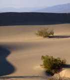 Softness Death Valley, California  February 2007
