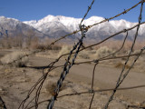 GALLERY :: Revisiting Manzanar, February, 2007