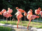 Vienna Zoo (Schönbrunn)