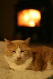 Tasmin by wood stove