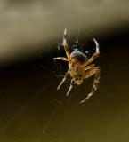 web weaver.jpg
