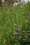 Assorted wildflowers
