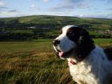 Midge on the ridge