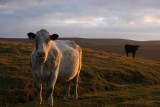 coos at sunset