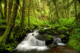 Cast Creek