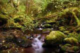 Rebel Creek