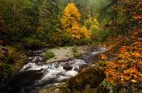 Fall Creek (Eugene)