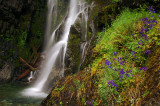 Henline Falls larkspur study