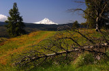 Mount Hood from above the arch, Study #1