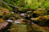 Henline Creek study #3