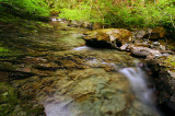 Henline Creek study #5