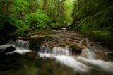 Henline Creek study #6