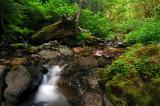 Henline Creek study #7