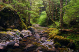 Henline Creek study #8
