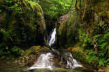 Jackie Falls