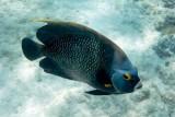 2013 Aruba: Day 4: Snorkeling