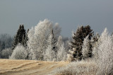 Hoarfrost in Northern Wisconsin