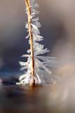 A miniature ice crystal tree