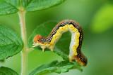 Caterpillar Arch