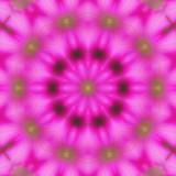 Petunia 2.jpg